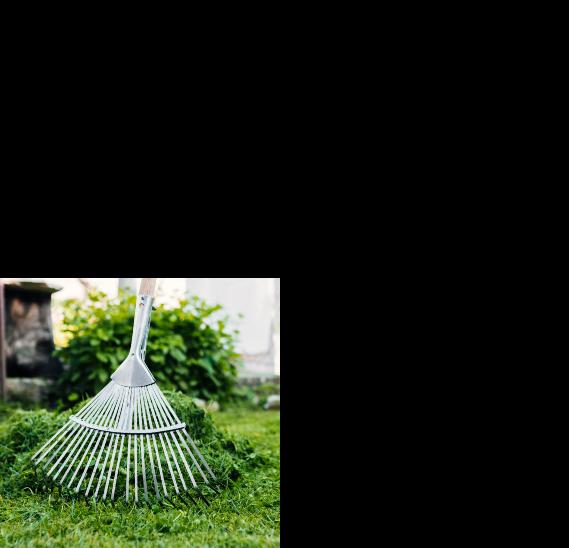 Arboréa Paysage - Entretien jardin Lauragais