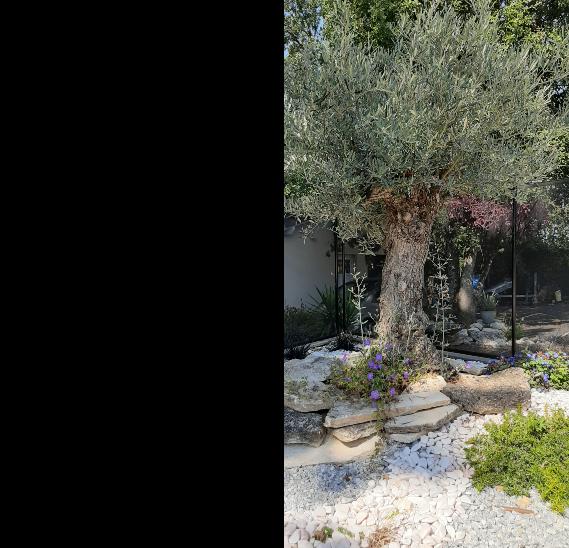 Arboréa Paysage - Création jardin Caraman